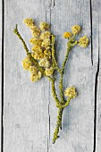 Dried everlasting flowers and lichen-covered branch lying on old board