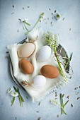 Brown and white eggs on linen napkin and grape hyacinths in Easter nest