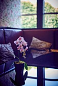 Potted orchid on glass table in front of sofa