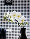 Black vase of white orchids in front of blurred checked background