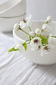 Apple blossom in white bowl