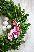 Wreath of box decorated with pink primulas and small speckled eggs