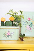 Cacti planted in vintage tin with floral pattern
