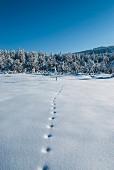 Tracks in snow in wintry landscape