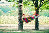 Striped hammock hanging in shade between two oak trees