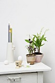 Potted plants next to eggcups and lit candles in vase on top of cabinet