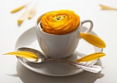 Yellow ranunculus in white mocha cup