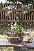 Easter arrangement of purple crocus, hay and yellow flowering twigs in wire baset