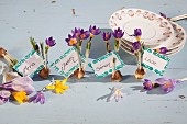 Decorative name tags, flower bulbs and purple crocuses next to stacked plates