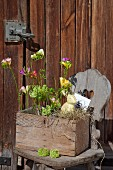 Flowers in rustic wooden crate with chicken wire on farmhouse chair