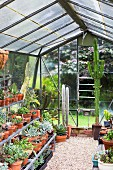 Greenhouse with gravel, various potted plants and cacti