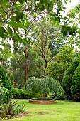 Hängebirke in Planzbeet auf Rasenfläche im Garten