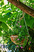 A hanging basket with pink petunias hangs in the tree