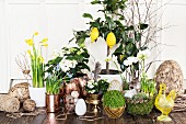 Easter arrangement of various plants and eggs