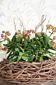 Flowers in nest of twigs in front of floral wallpaper