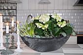 Bepflanzte Schale mit weißer Hortensie und Traubenhyazinthen