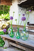 Alliums in glass bottles on rustic wooden benches