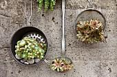 Houseleeks in vintage sieve, colander and ladle