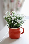 White campanula in red enamel jug