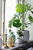 Philodendron in white pot, vases and brass candlesticks on windowsill