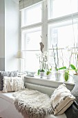 Comfortable cushions and sheepskin on bench below white orchids of windowsill