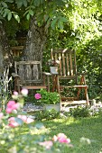 Two weathered wooden chairs under trees in summer garden