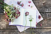 Astrantias on open notebook and polka-dot fabric