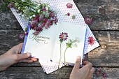 Hands holding open notebook and astrantias
