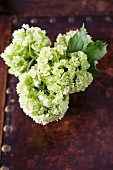 Bouquet of white hydrangeas (top view)