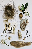 Vintage photographs, bird nest, scissors and natural objects