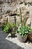 Mediterrane Pflanzen vor rustikaler Felswand
