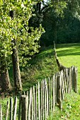 Paling fence, meadow and trees