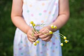 Child holding chamomile flowers