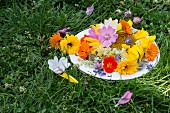 Dish of edible flowers on grass