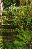 Mossy steps in garden