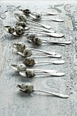 Quail eggs on old silver spoons on rustic wooden surface