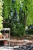 Terracotta pots on garden bench below tree