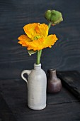 Yellow poppy and poppy buds in stoneware jug