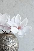 Delicate magnolia flowers in metal vase