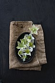 weiße Christrosenblüten auf schwarzem Teller und Sackleinen