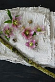 Pink hellebores, snail shells and mossy branch on linen cloth