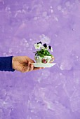 Viola planted in coffee cup held in hand