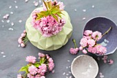 Pink cherry blossom in vase amongst scattered petals