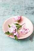 Edible pink hibiscus flowers on plate