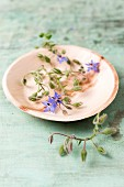 Edible borage flowers on plate