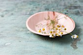 Edible chamomile flowers on plate