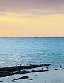 Beautiful sunset sky over the ocean