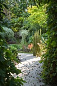 View through green plants into mature summer garden