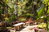 Stone bench, bromeliads and palm trees in exotic garden