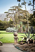 Well-tended lawn, succulents and ceders in exotic garden